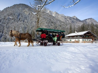 Horse sleigh rides